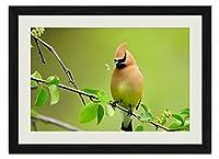 美しい鳥 動物の写真 壁掛け黒色木製フレーム装飾画 絵画 ポスター 壁画(30x40cm)