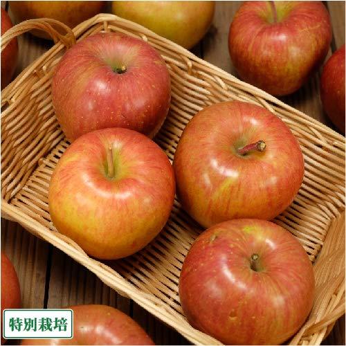 【加工用】 サンふじ 10kg箱 特別栽培 (青森県 阿部農園) 産地直送 ふるさと21