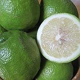 無農薬 グリーン レモン 2kg ノーワックス 防腐剤不使用 愛媛 中島産 訳あり 国産