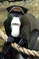 Debrazza's Monkey Journal: 150 Page Lined Notebook/Diary