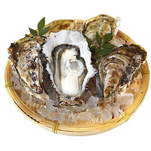 浦村 牡蠣 50個 殻付き 牡蠣 (牡蠣ナイフ・片手用軍手付き) 発泡箱入 三重県 鳥羽 浦村牡蠣 (加熱用)