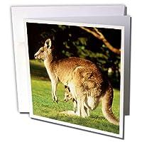 野生動物–カンガルー–グリーティングカード Set of 6 Greeting Cards