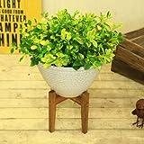 観葉植物:ペペロミア グラベラ シェル鉢*(木製スタンド付き)陶器鉢
