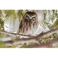 樹上のフクロウ動物 - #30535 - キャンバス印刷アートポスター 写真 部屋インテリア絵画 ポスター 90cmx60cm