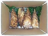 農家直送、朝取り泥付き【くまもと金峰山麓】梨屋の旬の筍(ぬか付き)3kg詰め1箱
