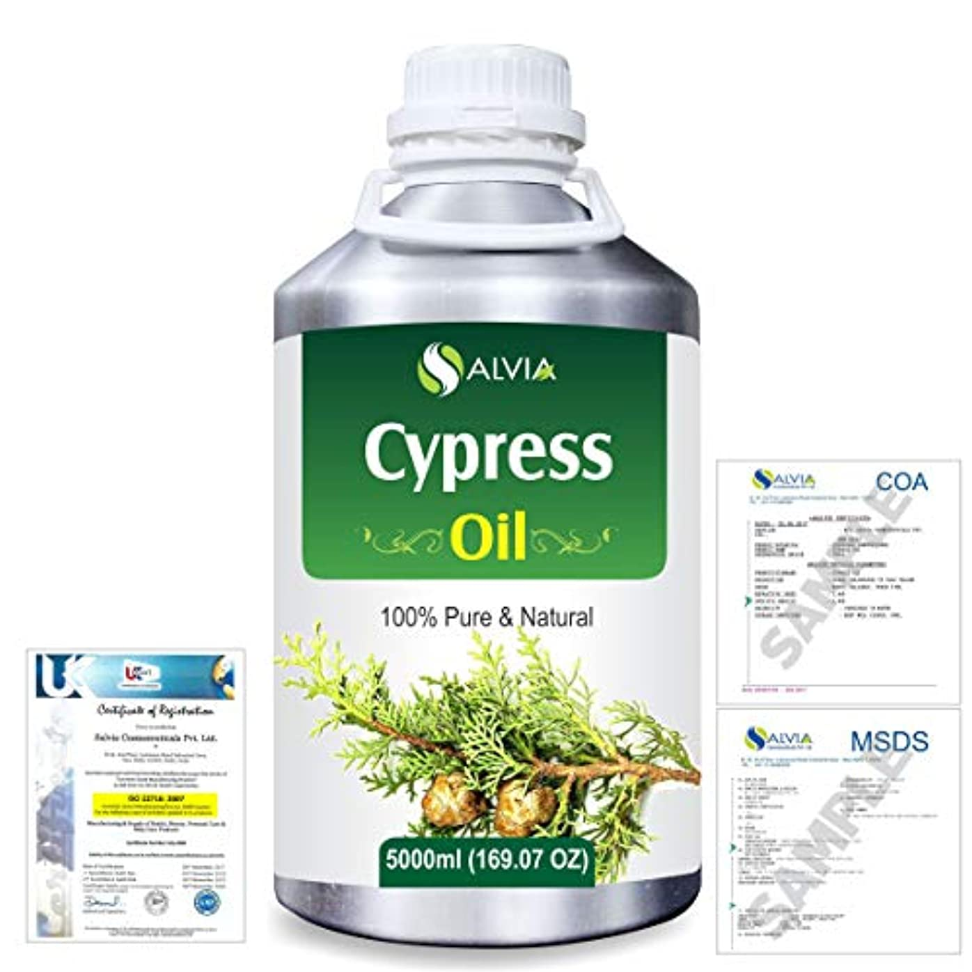 ポーチたくさんの六Cypress(Cupressus sempervirens) 100% Natural Pure Essential Oil 5000ml/169fl.oz.