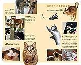 (115)猫の學校: 猫と人の快適生活レッスン (ポプラ新書) 画像