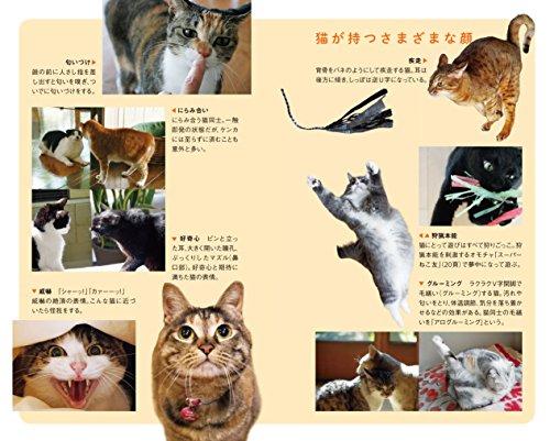 (115)猫の學校: 猫と人の快適生活レッスン (ポプラ新書)