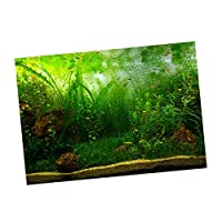 P Prettyia 水族館 背景 接着剤 ポスター 魚のタンク 壁 装飾 ステッカー 多種選べる - 水草, M