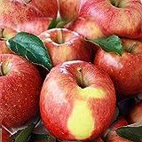青森 葉とらずりんご ふじ 家庭用