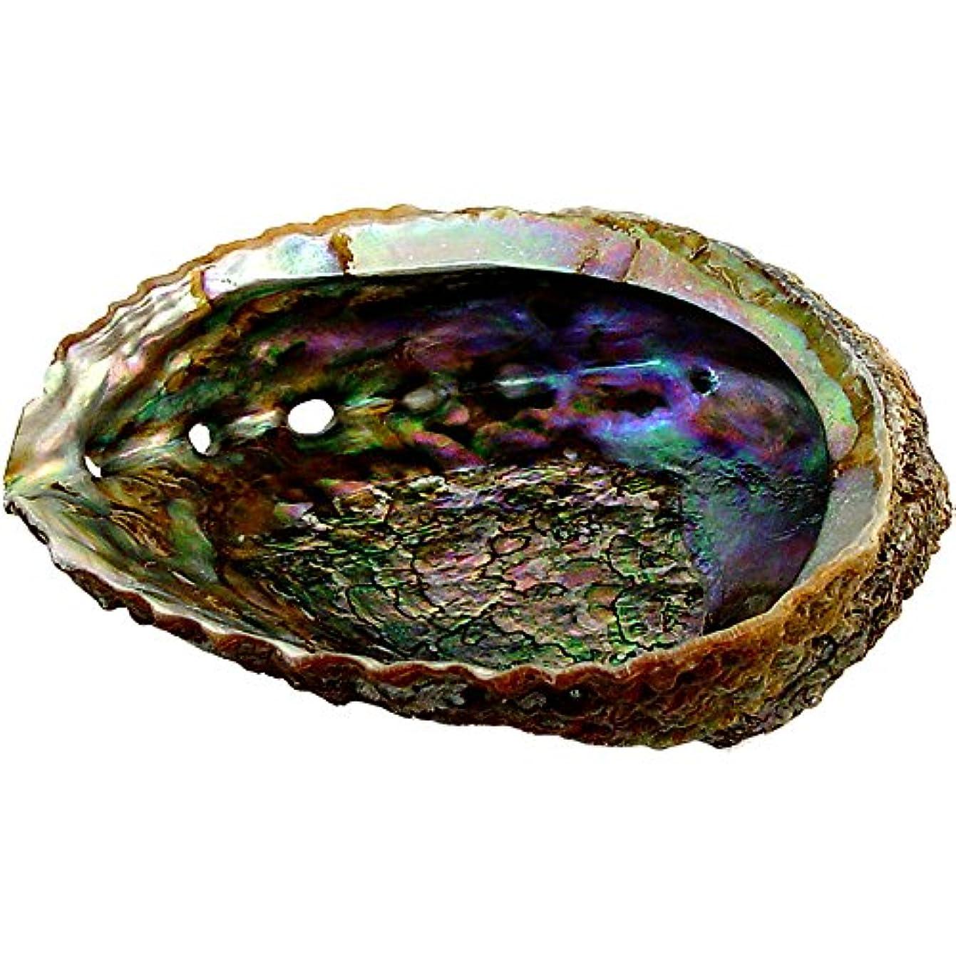 免疫する反対に偶然のプレミアムExtra Large Abalone Shell 5 – 6
