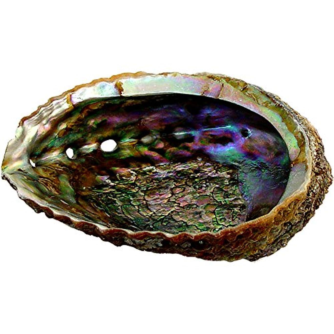あたたかいやるワームプレミアムExtra Large Abalone Shell 5 – 6