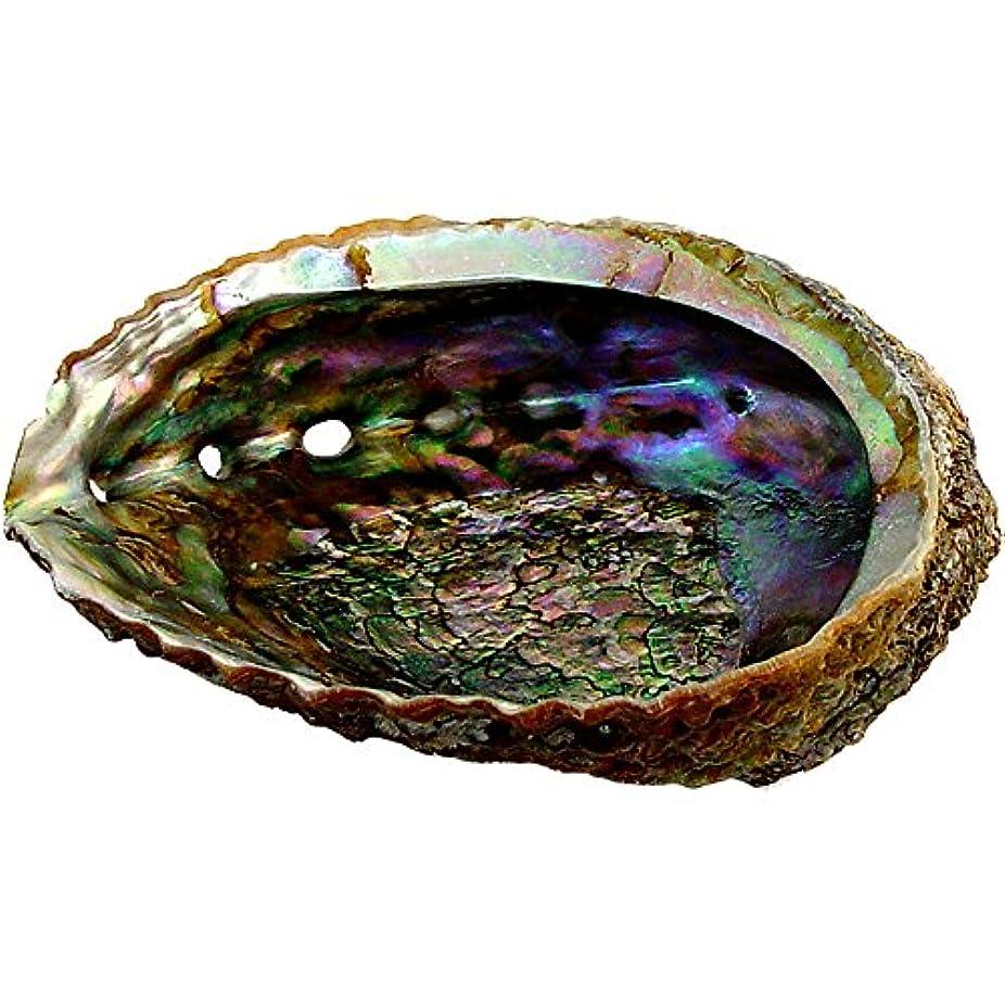 飲料スチュアート島サイズプレミアムExtra Large Abalone Shell 5 – 6