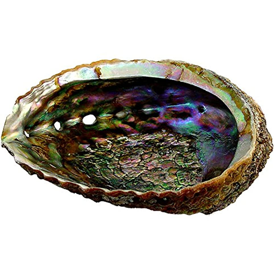 プレミアムExtra Large Abalone Shell 5 – 6