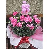 母の日定番!高品質ピンクのカーネーション鉢植え 可愛いプードルピック付き