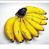 沖縄県産 島バナナ 1房 (約300g前後) お試し 南国のトロピカルフルーツ 島ばなな (6月頃)