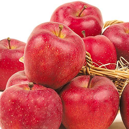 国華園 青森産 スターキング 5kg1箱 りんご