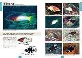 ベラ&ブダイ: 日本で見られる192種+幼魚、成魚、雌雄、婚姻色のバリエーション (ネイチャーウォッチングガイドブック) 画像