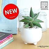 LAND PLANTS サンスベリア × 足付丸型小鉢