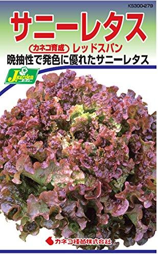 カネコ種苗 野菜タネハイクオリティ279 サニーレタス レッドスパン 10袋セット