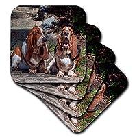 3drose Danita Delimont–犬–2つバセットハウンド座っているTogether–コースター set-of-8-Soft cst_258137_2