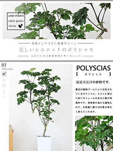LAND PLANTS ポリシャス 白色スリム陶器鉢 table green series