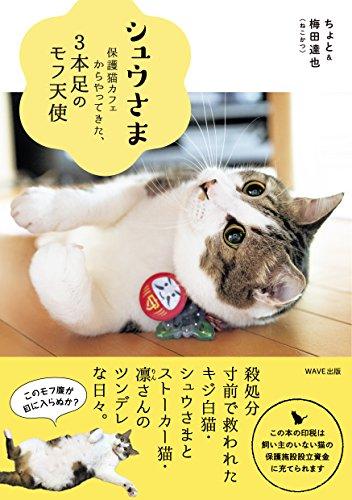 シュウさま-保護猫カフェからやってきた3本足のモフ天使-