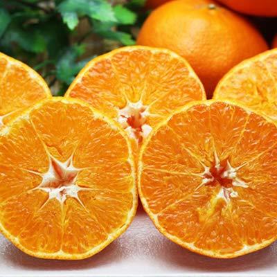 「お試し甘平3×2」お試し 愛媛甘平(かんぺい)6kg(3kg×2箱),せとかにも匹敵する柑橘 果物 フルーツ 柑橘 通販