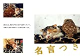 フクロウのフクと猫のマリモ ずっとともだち。 画像