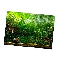 Sharplace 水族館 魚のタンク 背景 接着剤 ポスター 背景 装飾 ステッカー 美しい 多種選べる  - 水草, M