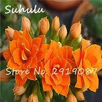 1:100種子/バッグ希少長寿種子美しい花の種カランコエ小説植物盆栽屋内ホームガーデン簡単に育てる