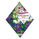 [春・秋まき 花タネ][フランス花の種]ルピナス:アニュアルサンライズ 1袋 ノーブランド品