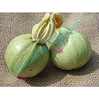 種子パッケージ:ニース種子ズッキーニ種子のズッキーニラウンド