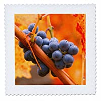 3drose Danita Delimont – Vineyards – カリフォルニア、ナパバレー、Dew On Cabernet Grapes秋にVineyard – キルト正方形 22x22 inch quilt square qs_258871_9