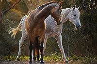 馬の動物 - #4069 - キャンバス印刷アートポスター 写真 部屋インテリア絵画 ポスター120cmx80cm