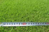 高麗芝(芝生の種類)