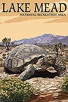 Lake Mead–Nationalレクリエーションエリア–Tortoise 36 x 54 Giclee Print LANT-49359-36x54