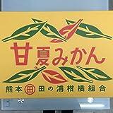 熊本 田ノ浦柑橘【甘夏】ご自宅向き10キロ 20から28玉入り~名古屋市中央卸売市場発~