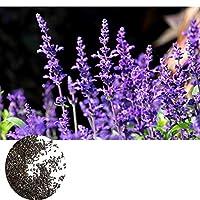 Etopfashion 800ピース/セット ラベンダーシードキット グリーン 新鮮な空気 開花植物種子 贈り物 庭の装飾 種 盆栽 癒し 屋外 栽培 鉢植え 高い発芽率