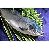 幻の鮭(さけ)鮭児,鮭司【ケイジ】 1.7キロ前後