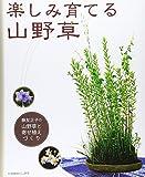 楽しみ育てる山野草―藤友正子の山野草と寄せ植えづくり (別冊趣味の山野草) 画像