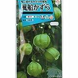 [タキイ 花タネ]風船かずら の種 5袋セット[フウセンカズラ 生育旺盛・緑のカーテンに 春まき]