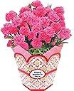 母の日 カーネーション 鉢植え フラワーギフト 5号鉢 (ピンク)