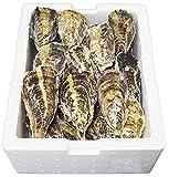 坂越牡蠣 殻付牡蠣 2kg