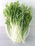 無農薬 サラダ水菜 (70g)10袋パック