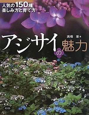 あじさいの5月~蕾が膨らみ開花シーズン目前