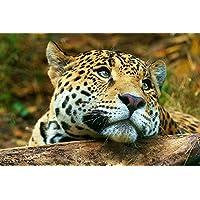 落ち着きのあるヒョウ動物 - #25294 - キャンバス印刷アートポスター 写真 部屋インテリア絵画 ポスター 90cmx60cm