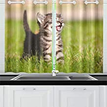 Adorable Meowing Tabby Kitten Outdoors Stock Photo Kitchen Curtains Window Curtain Tiers for Café, Bath, Laundry, Living Room Bedroom 26 X 39 Inch 2 Pieces