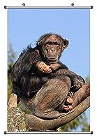 ツリー上のゴリラ 動物の写真ポスター掛け軸(40cmx60cm)