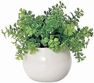 Amazon|かわいい まあるい 光触媒 インテリア グリーン ファンシェイプ|人工観葉植物 オンライン通販